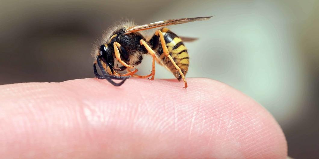 Angst vor Insektenstichen - NOMAX Hypnose