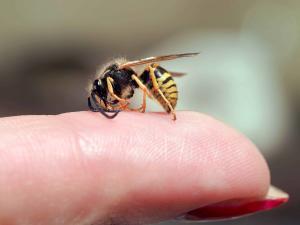 Angst vor Insektenstichen
