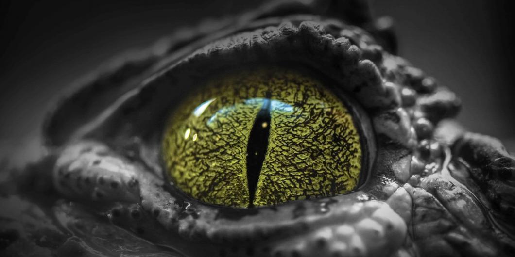 Angst vor Reptilien - NOMAX Hypnose
