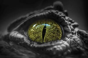Angst vor Reptilien