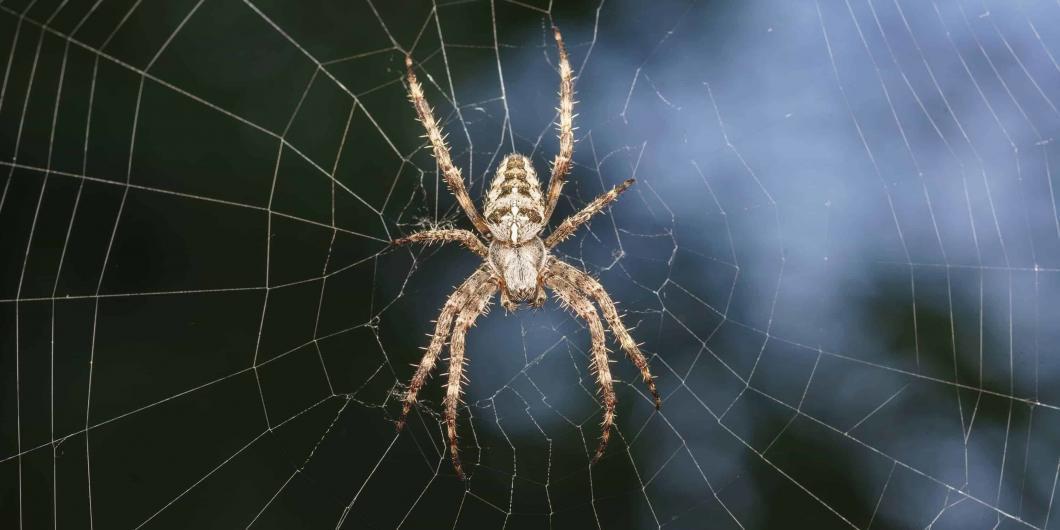 Angst vor Spinnen - NOMAX Hypnose